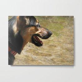 The happy dog Metal Print