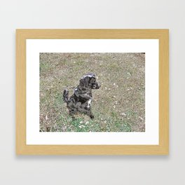 Black Lab Pup Watches and Waits Framed Art Print