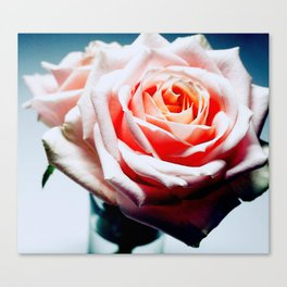 Adorable White and Pink Rose Canvas Print