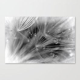 Dew Canvas Print