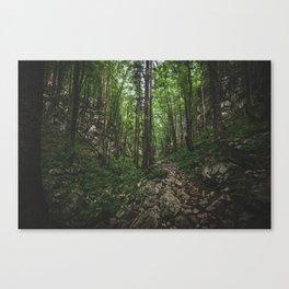 Slovenian Forest Canvas Print