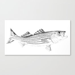 Striped Bass - Pen and Ink Illustration Canvas Print