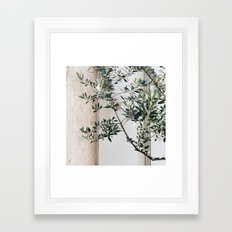 Olive Branch Framed Art Print