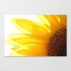 Sunflower 794 Canvas Print