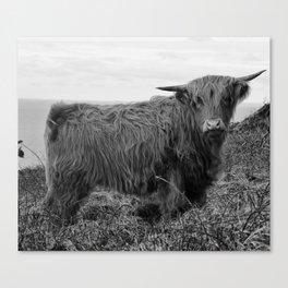 Highland cow II Canvas Print