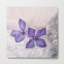 Zen Soft Pastel Purple Clematis Blossom Metal Print