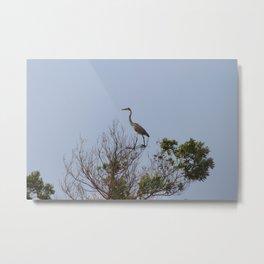 Heron in Tree Metal Print