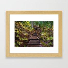 Giant Cedars Boardwalk in Revelstoke National Park, BC Canada Framed Art Print