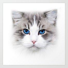 Pussy Cat Love Kitten Cute Blue eye Art Print