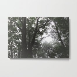 Forest Trail XLII Metal Print
