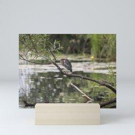 Green Heron on a Branch Mini Art Print