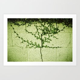 Ivy Wall Art Print