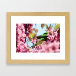 Rosella Framed Art Print