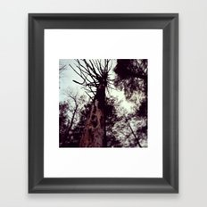 Dead Tree Framed Art Print