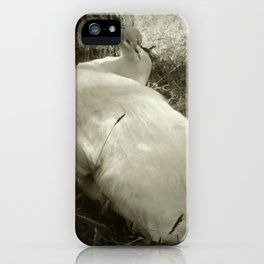 Lounging Peacock in the Shade iPhone Case