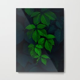Beautiful Hanging Green Leaves Against A Dark Background Metal Print