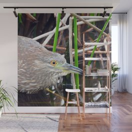 Juvenile Black Crowned Night Heron Wall Mural