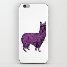 suri alpaca iPhone & iPod Skin