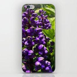 Simply purple iPhone Skin