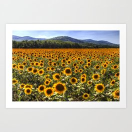 Sunflower Fields Of Dreams Art Print