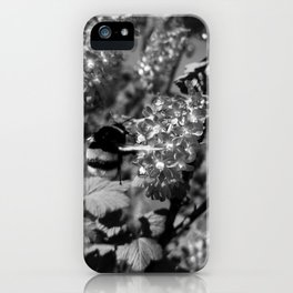 Bumble Bee and Blood Currant Ribes Sanguineum bw iPhone Case