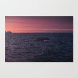 Humpwhale  Canvas Print