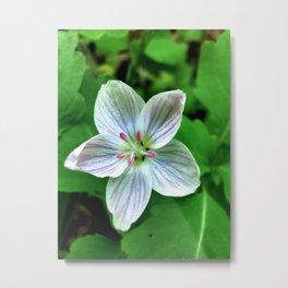 Spring Beauty Metal Print