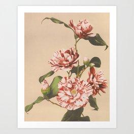 Beautiful photomechanical prints of Striped Camellias (1887–1897) by Ogawa Kazumasa. Art Print
