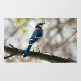 Blue Jay Calling Rug