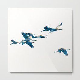 Beautiful Cranes in white background Metal Print