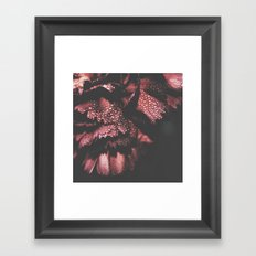 carnation V Framed Art Print