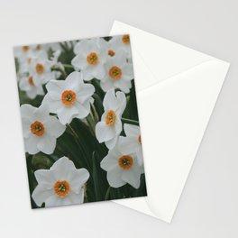 Daffodil 'Dreamlight' Stationery Cards