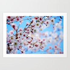 Arboretum Blossoms Art Print