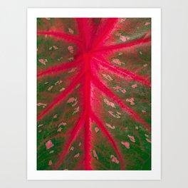 Caladium Red Flash Houseplant Leaf Pattern Closeup Art Print