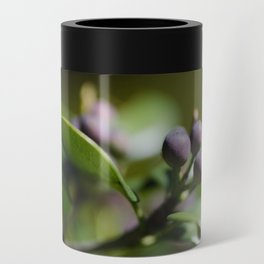 Blueberries Can Cooler