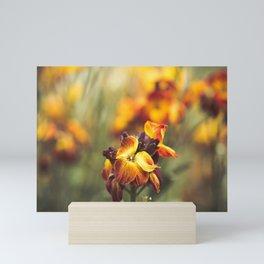 Vibrant Matthiola incana flowers Mini Art Print