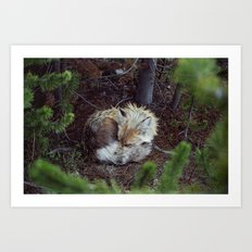 Sleeping Fox Art Print