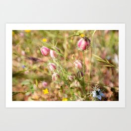 Pretty Nigella Art Print