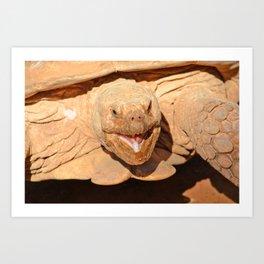 Geochelone sulcata Art Print