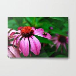 Echinacea & Fly Metal Print