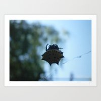 Spiny Orb Weaver Art Print