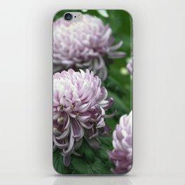 Longwood Gardens Autumn Series 275 iPhone Skin
