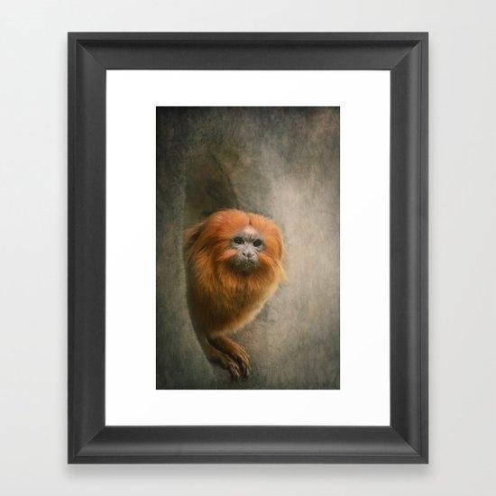 Little Golden Headed Lion Tamarin Framed Art Print