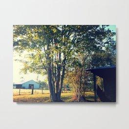 Tree in the Light Metal Print