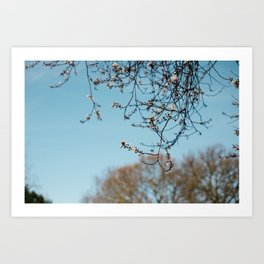 Holland Park #1 Art Print