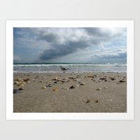 Walking Seagull  Art Print