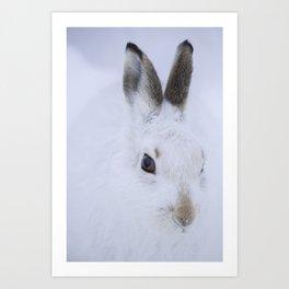 White bunny, white snow Art Print