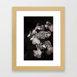 Black and White Botanical -- Antique Lacecap Hydrangea Framed Art Print
