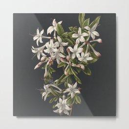 M. de Gijselaar - Branch of blooming azalea (1831) Metal Print