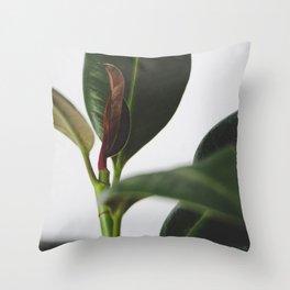 Ficus elastica Throw Pillow